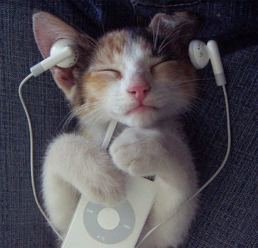 1711d1282666945-ipod-music-cat-enjoy-ipod - Lazy Sunday - Anonymous Diary Blog